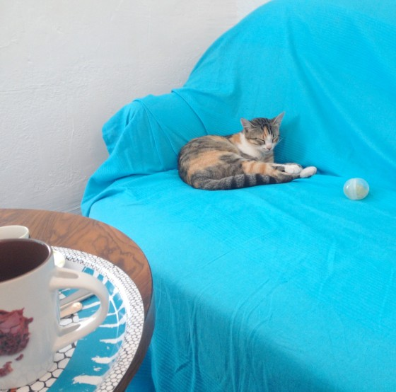 cafe-cats-salon-the-antibes-ronrontherapie